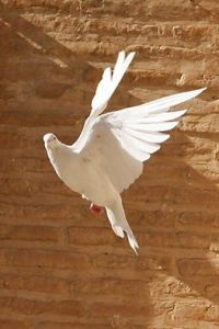 Dove of Peace climbing walls